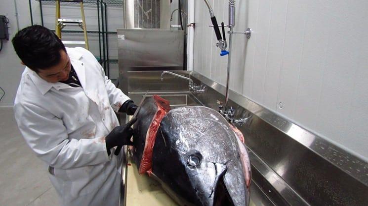 sushi-rama-tuna-07